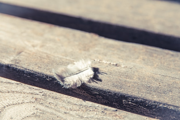Close-up shot van de veer van een vogel op een roestig houten oppervlak