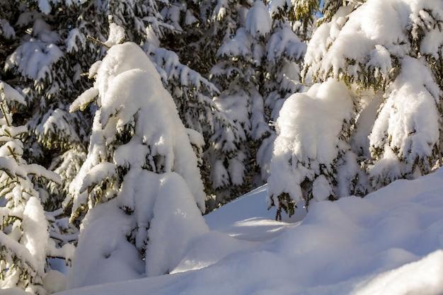 Close-up shot van dennenboom tak met groene naalden bedekt met diepe verse schone sneeuw op wazig blauwe buiten kopie ruimte achtergrond. prettige kerstdagen en gelukkig nieuwjaar groet briefkaart.