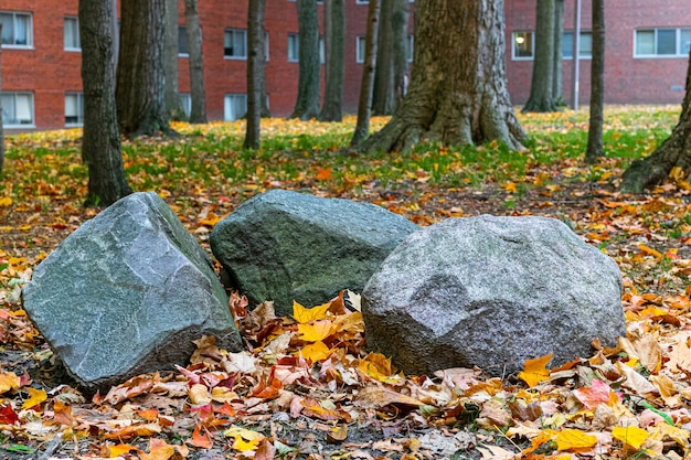 Close-up shot van drie rotsen op de grond in de buurt van bomen in het park