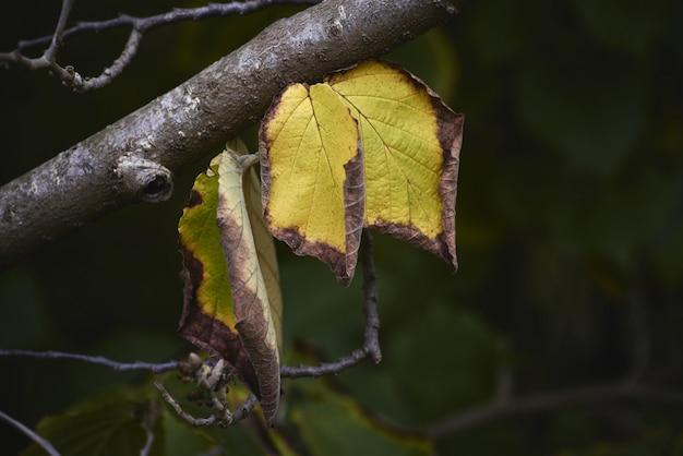 Close-up shot van droge bladeren op een boomtak