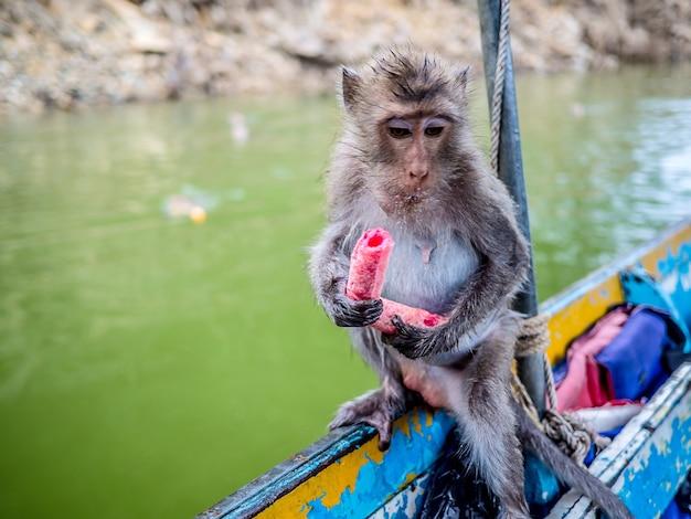 Close-up shot van een aap is snoep eten op de boot