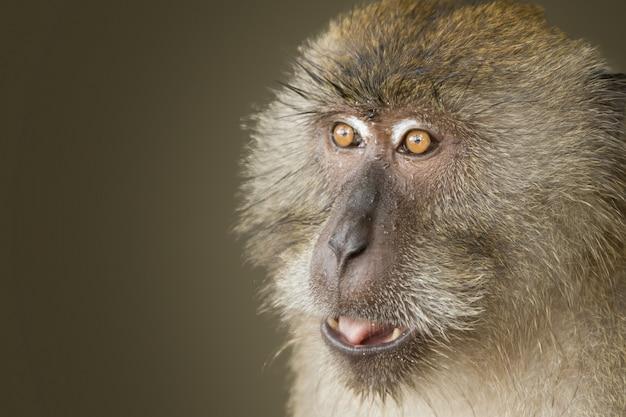 Close-up shot van een aap met zijn ogen wijd open
