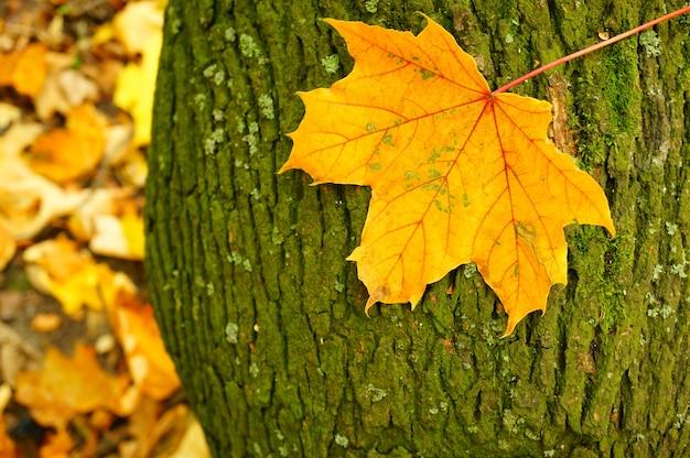 Close-up shot van een blad op een boomschors tijdens de herfst