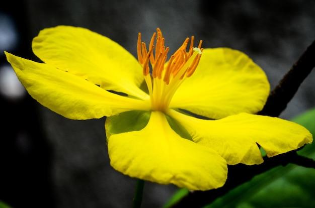 Close-up shot van een bloem met gele bloemblaadjes overdag