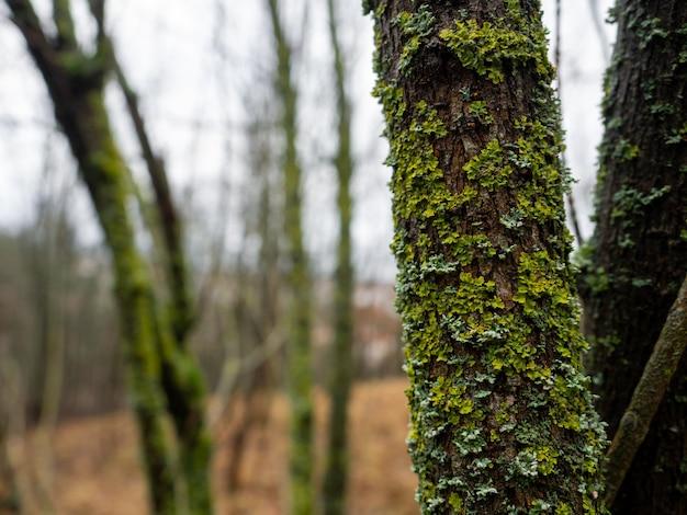 Close-up shot van een boom bedekt met groen in een bos