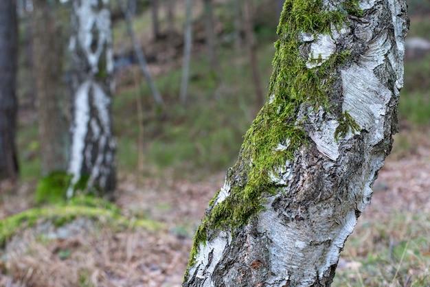 Close-up shot van een boom bedekt met mos op een onscherpe achtergrond