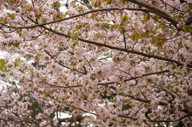 Close-up shot van een boom met bloemen op zijn takken