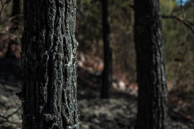 Close-up shot van een boomstam met een wazig
