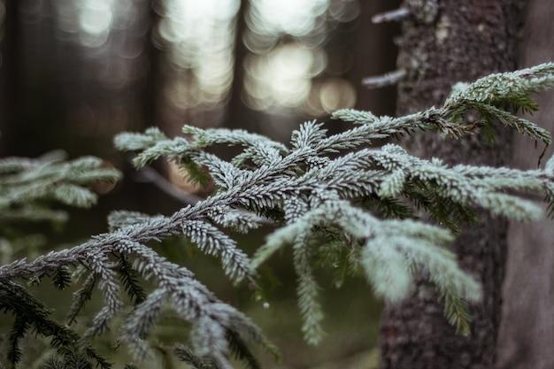 Close-up shot van een boomtak bedekt met sneeuw