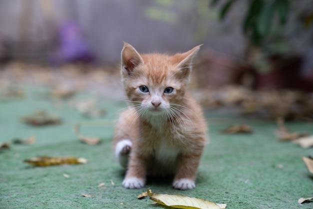 Close-up shot van een bruin kitten op de grond