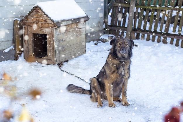 Close-up shot van een bruine hond onder sneeuwweer in de buurt van het hek