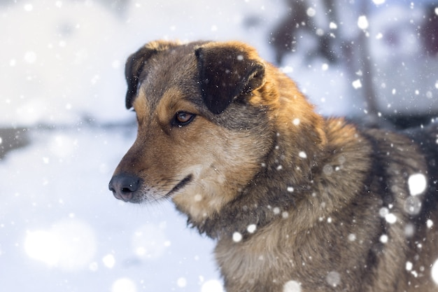Close-up shot van een bruine hond onder sneeuwweer opzij kijken