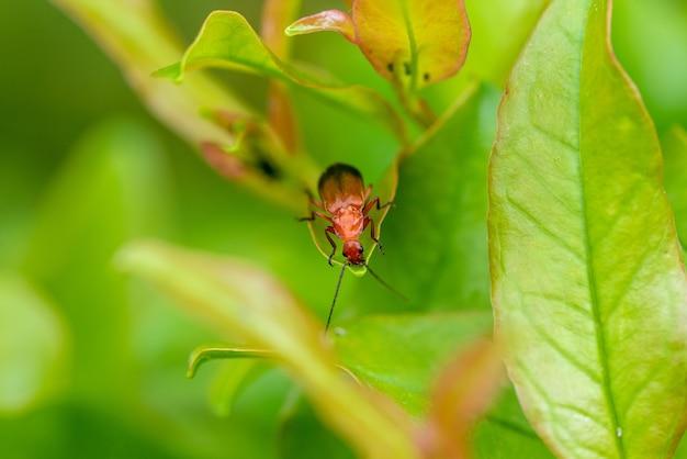 Close-up shot van een cicade op een groene plant met een onscherpe achtergrond