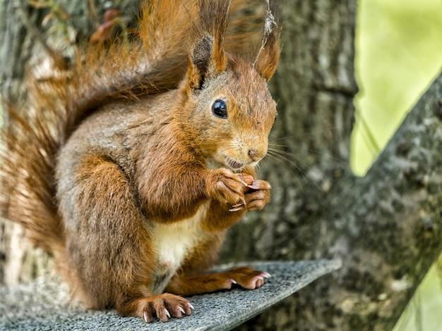 Close-up shot van een eekhoorn op de boomtak onder het zonlicht