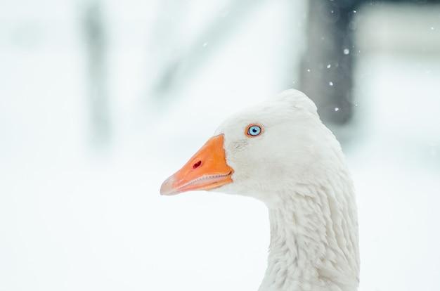 Close-up shot van een gans in een veld tijdens een sneeuwval