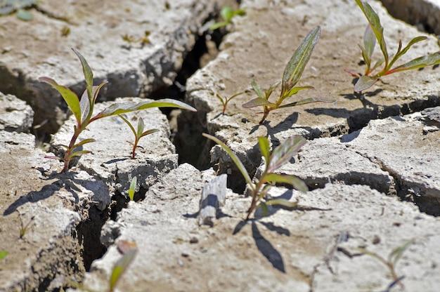 Close-up shot van een gebarsten grond