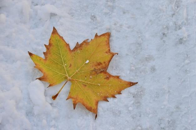 Close-up shot van een geel herfstblad in de sneeuw