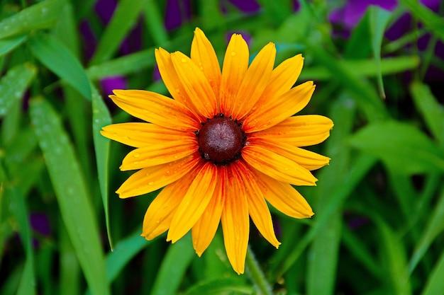 Close-up shot van een geel-rode bloem met bruin centrum