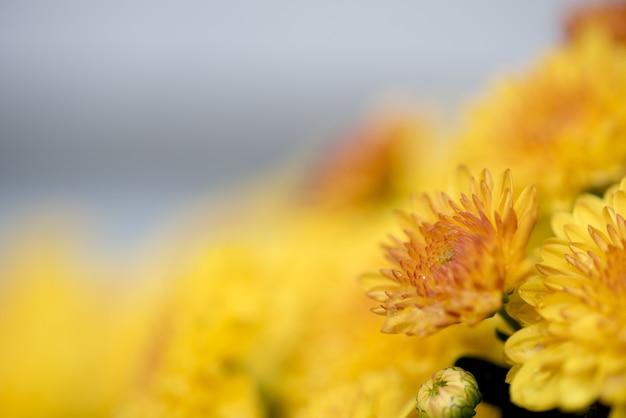 Close-up shot van een gele bloem met een onscherpe achtergrond