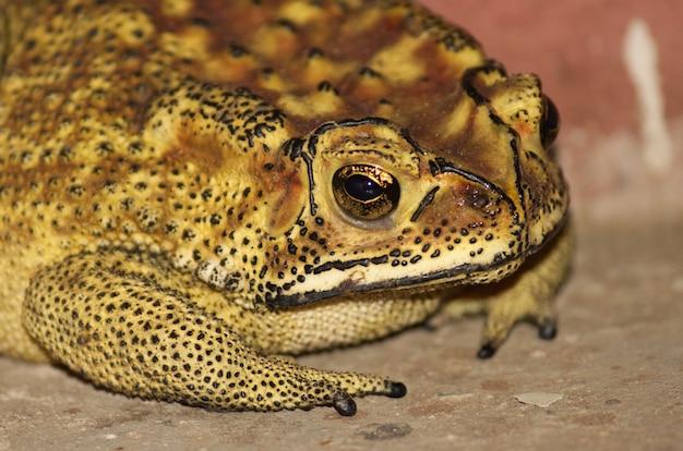 Close-up shot van een gele en bruine kikker op de grond