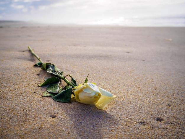 Close-up shot van een gele roos op het strand op een zonnige dag met een onscherpe achtergrond