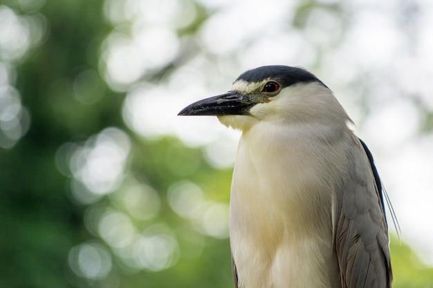 Close-up shot van een gestreepte reiger