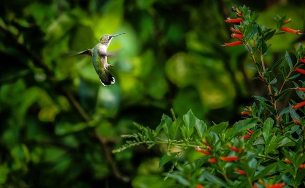 Close-up shot van een groene kolibrie naast een boom