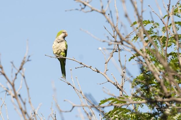 Close-up shot van een groene papegaai zittend op een tak van een boom opzij kijkend