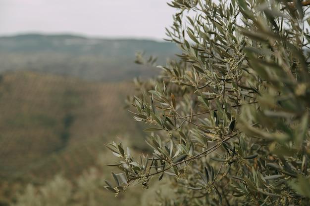 Close-up shot van een groene plant