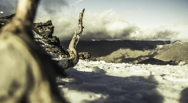 Close-up shot van een grote boomtak op een besneeuwd landschap