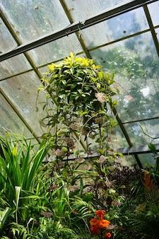 Close-up shot van een hangende plant in een kas op een zonnige dag