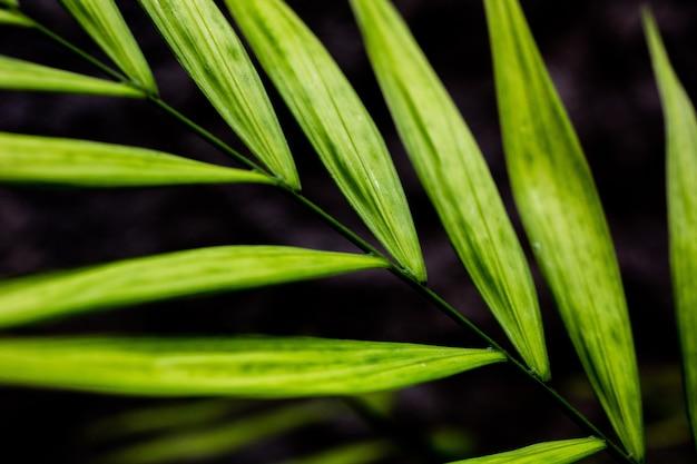 Close-up shot van een helder groen blad geïsoleerd op een onscherpe achtergrond