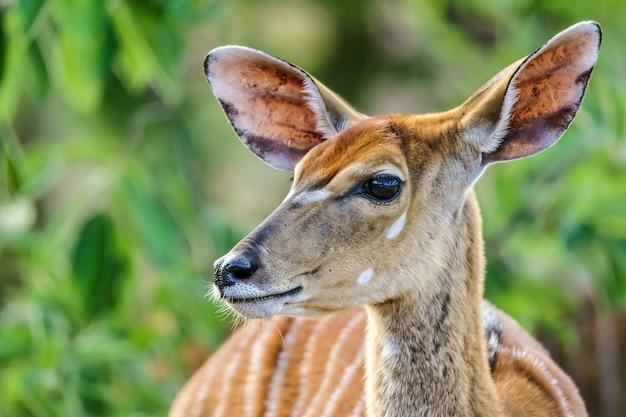 Close-up shot van een hert met groen op de achtergrond