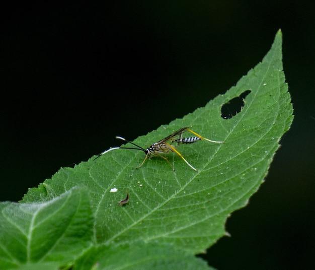 Close-up shot van een insect op een groen blad met een zwarte achtergrond