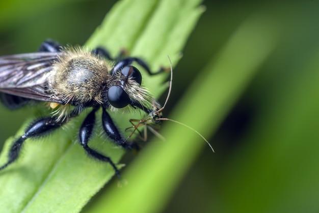 Close-up shot van een insect staande op een groen blad