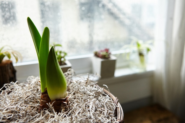 Close-up shot van een kamerplant in een bloempot bij het raam