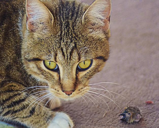 Close-up shot van een kat met groene ogen en een boze blik
