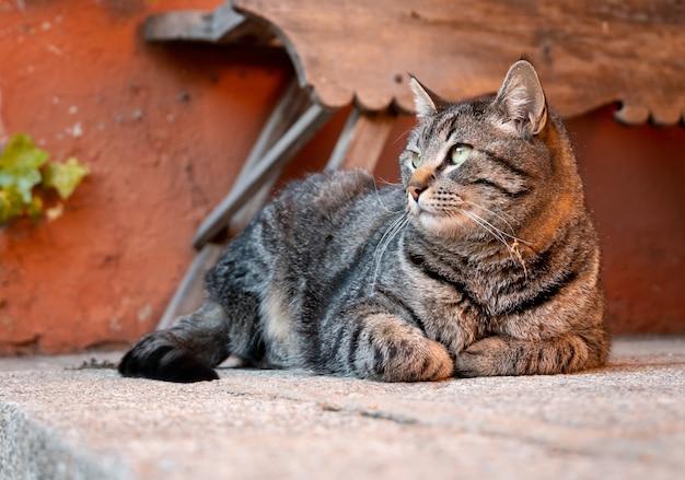 Close-up shot van een kat met zwart-witte patronen, zittend op de grond