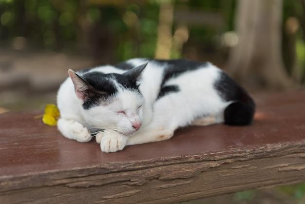 Close-up shot van een kat op de grond, huisdier
