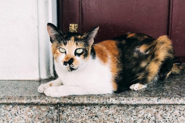 Close-up shot van een kat staren naar de camera