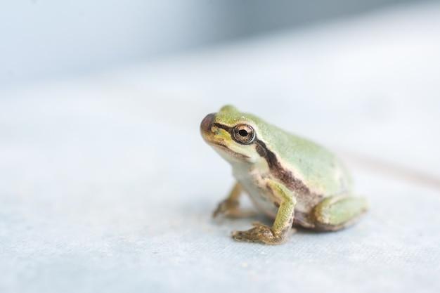 Close-up shot van een kleine kikker