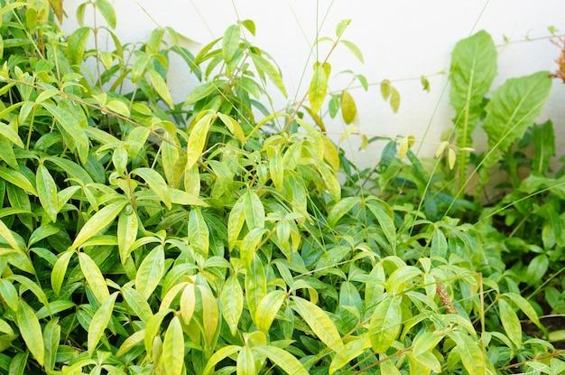 Close-up shot van een kleine struik met groene bladeren voor een witte muur