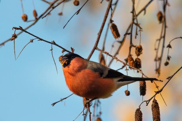 Close-up shot van een kleine vogel zittend op een stuk van een tak onder een blauwe hemel