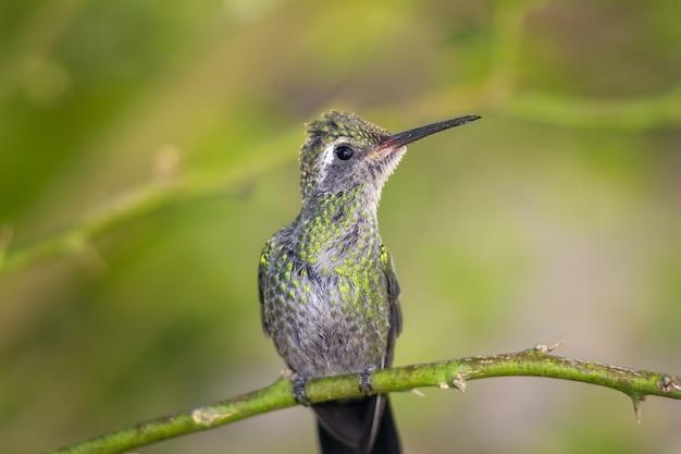 Close-up shot van een kolibrie neergestreken op een boomtak op een wazige achtergrond