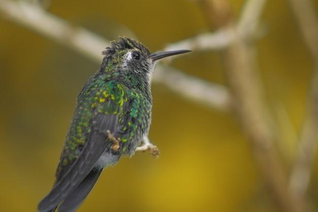 Close-up shot van een kolibrie neergestreken op een boomtak