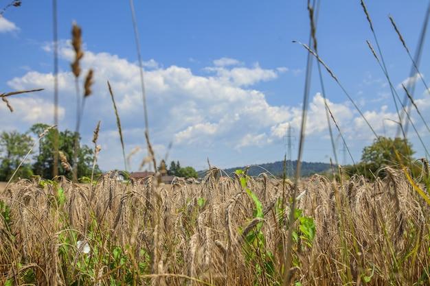 Close-up shot van een landbouwveld op de achtergrond van de lucht