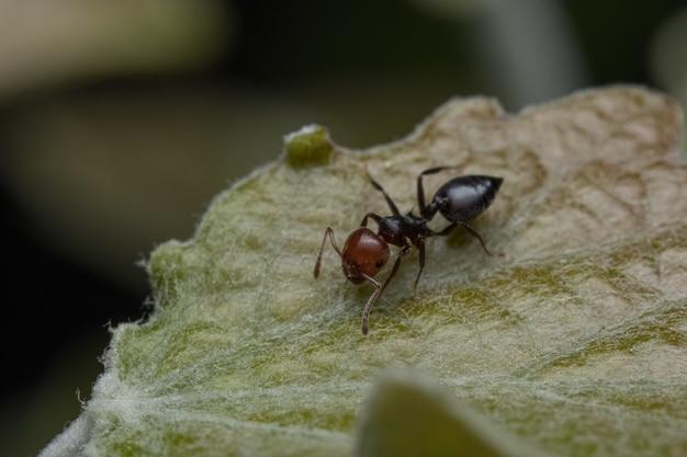 Close-up shot van een mier op het groene blad