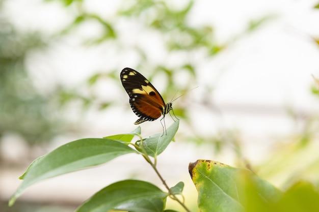 Close-up shot van een monarchvlinder op groen blad met een bokeh-achtergrond