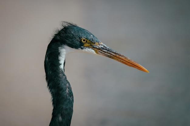 Close-up shot van een mooie blauwe vogel