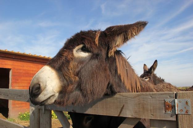 Close-up shot van een mooie bruine ezel met een bewolkte blauwe hemel